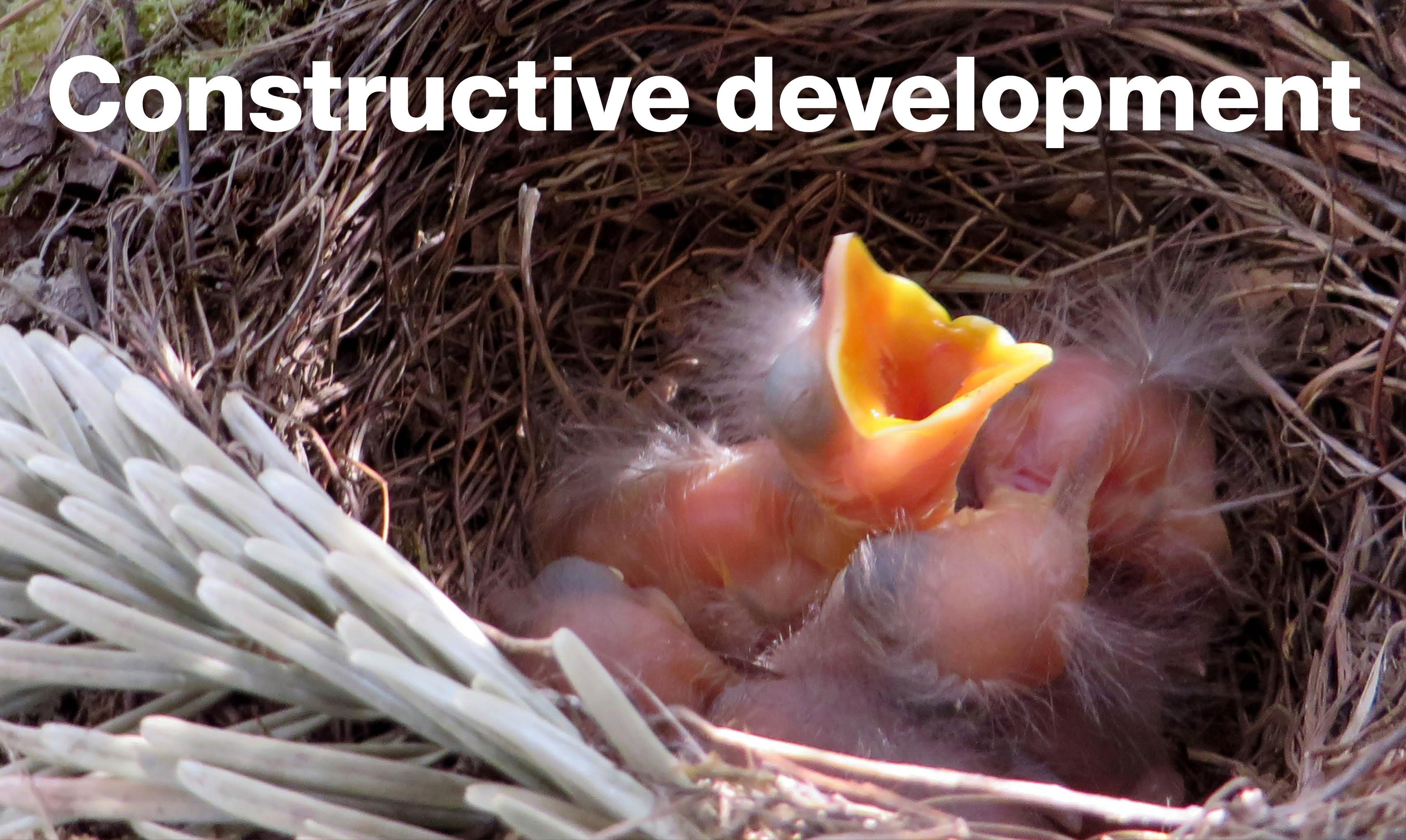 Constructive development