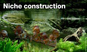 Niche construction