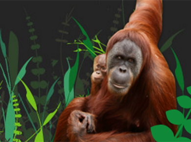 PSGB orangutan