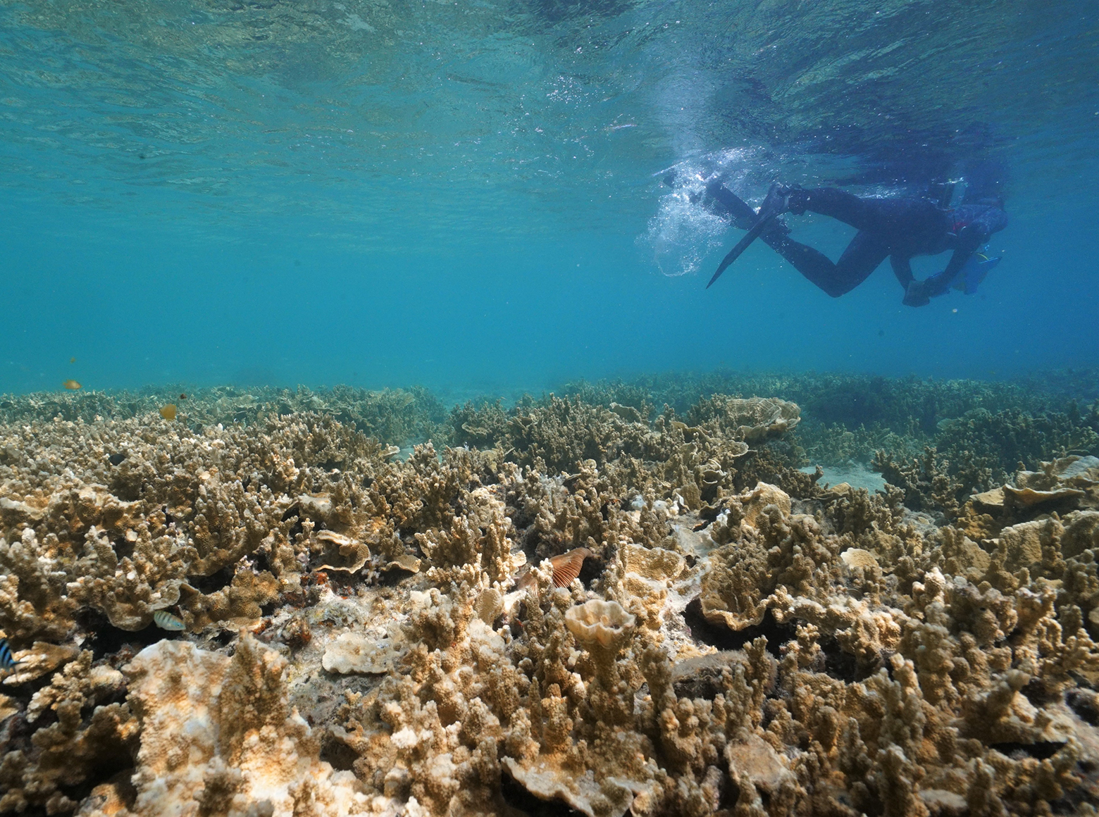 Coral reefs and niche construction: quantifying patterns thumbnail