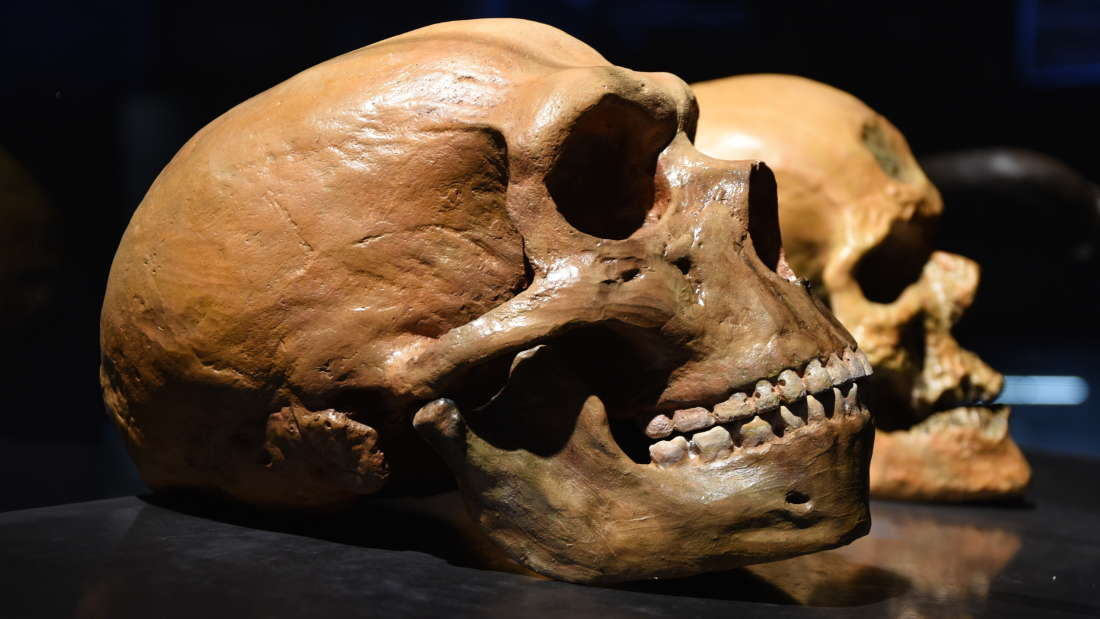"Neanderthals were ""doomed"" to extinction thumbnail"