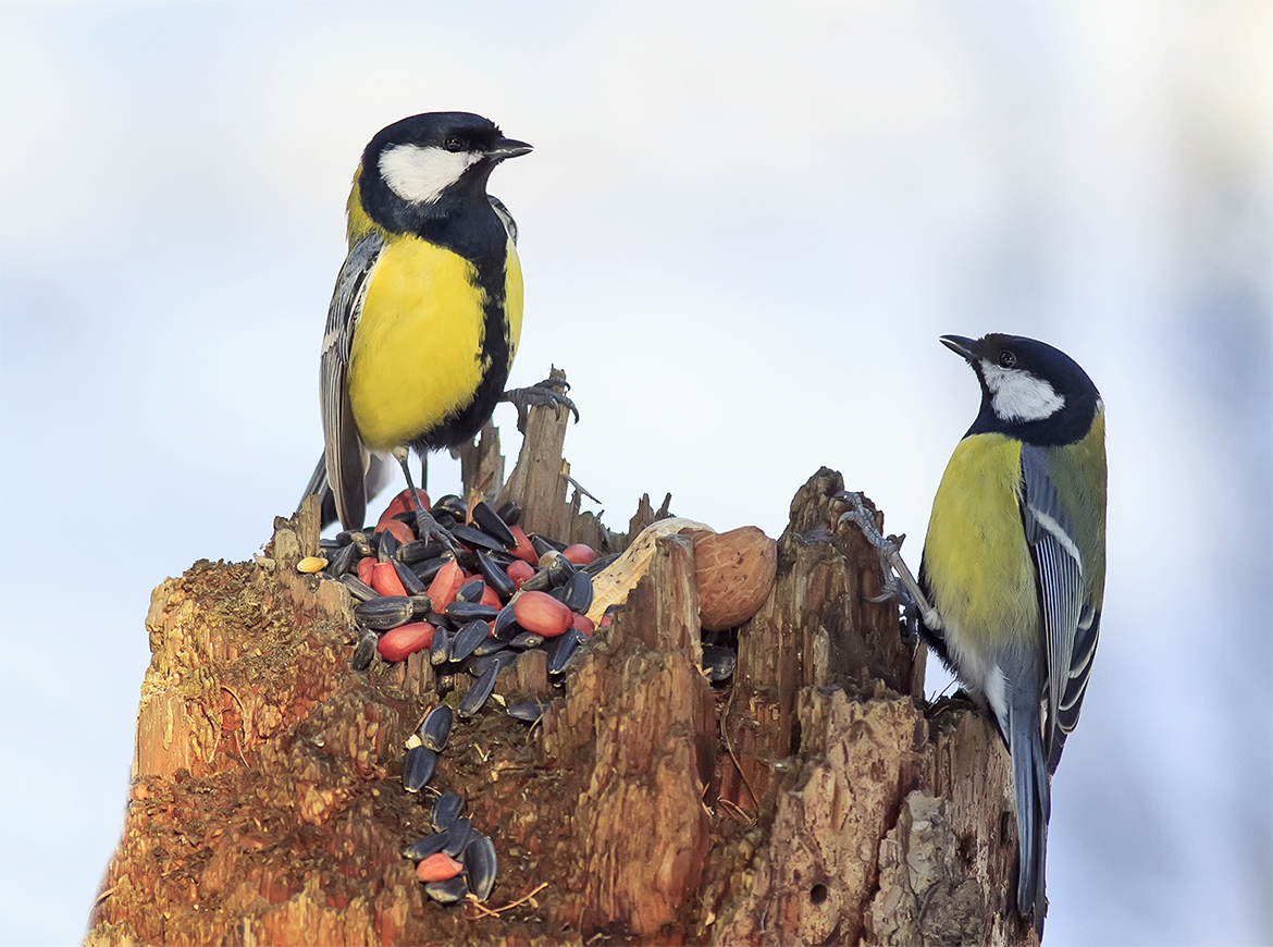 Is social transmission a forgotten force in coevolution? thumbnail