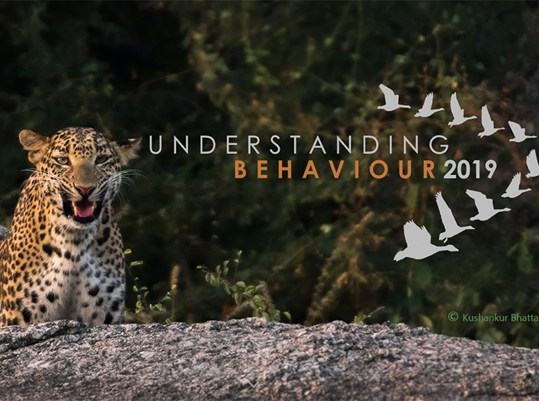 tiger image with Understanding Behaviour 2019 logo superimposed