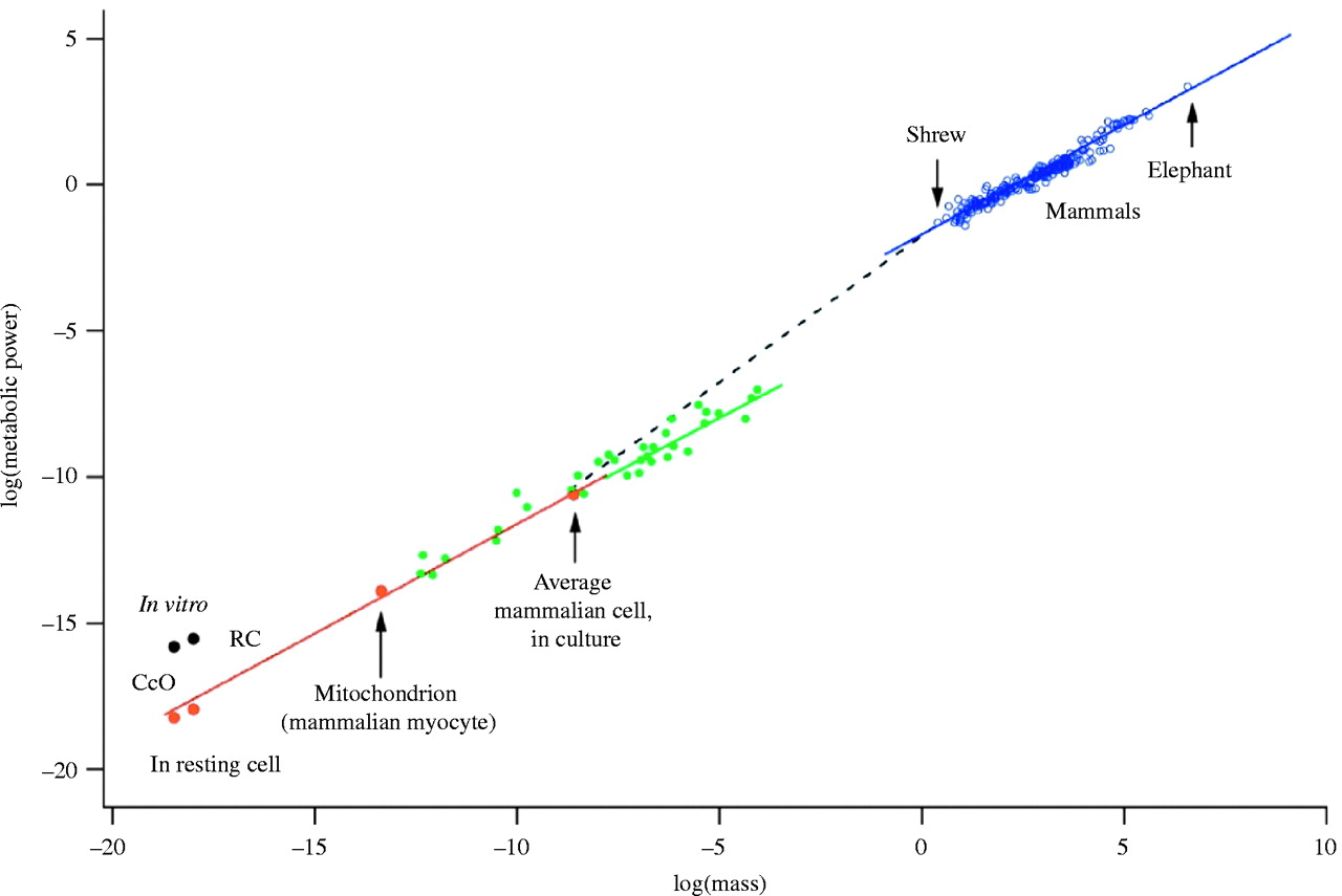 graph showing scaling law between metabolic rate and body mass