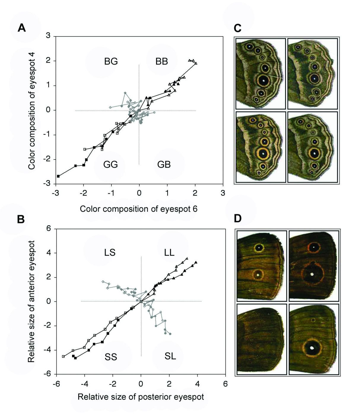 Butterfly eyespot color and size morphospaces
