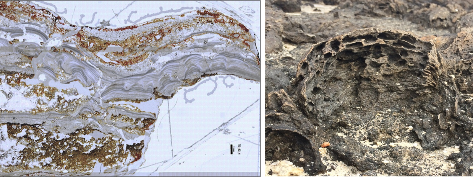 micrograph and photograph of stromatolites