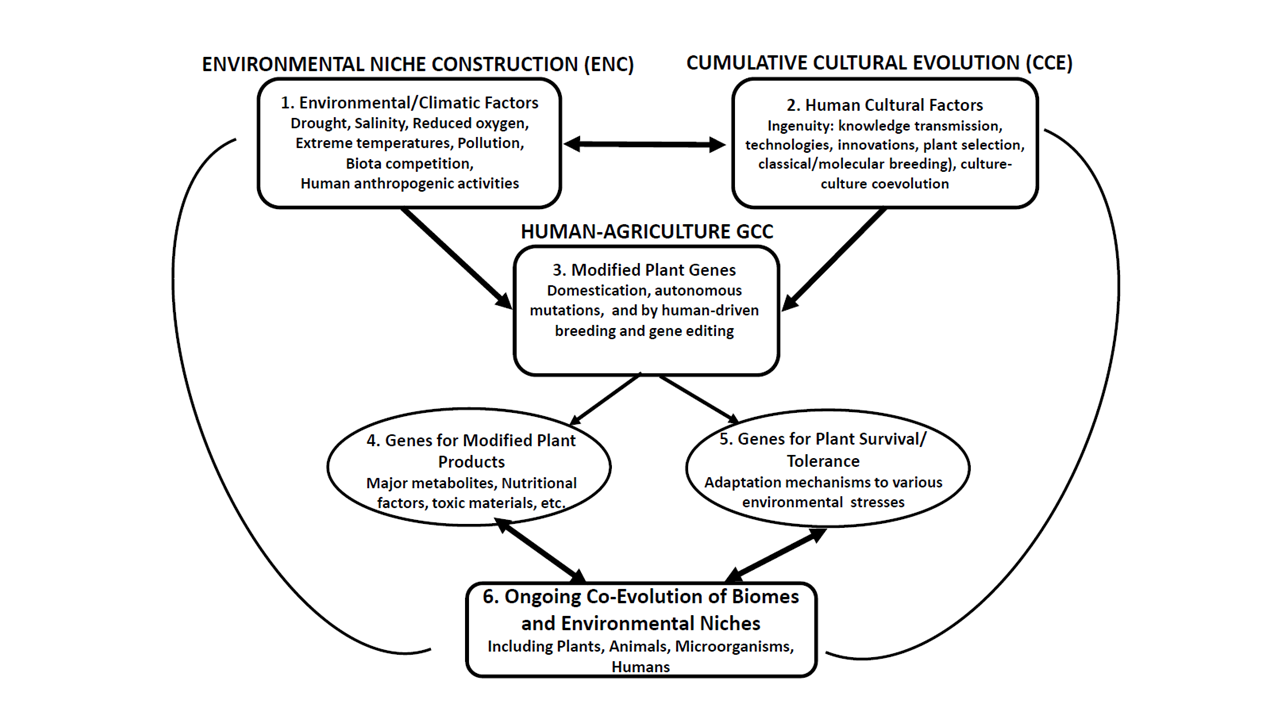 Domestication and Agriculture are the Outcome of Plant Gene-Human Culture Coevolution thumbnail